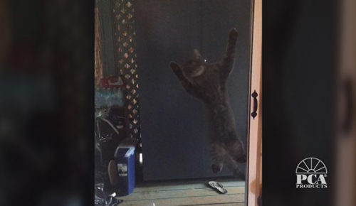 Video Catscreen